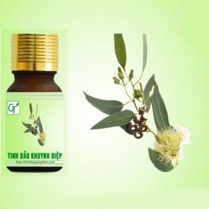 Tinh dầu khuynh diệp tại tinh dầu GT