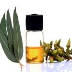 Công dụng của tinh dầu Khuynh Diệp nguyên chất