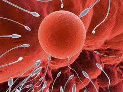 Cách tính ngày rụng trứng theo chu kỳ kinh nguyệt an toàn và chính xác nhất