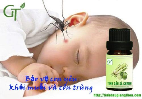 Tinh dầu sả có tác dụng đuổi muỗi tốt nhất trong tất cả các loại tinh dầu