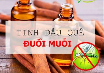 Tinh dầu quế có thể sử dụng để đuổi muỗi khá hiệu quả